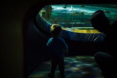 Will (17 months old) at Ripley's Aquarium (Katherine Ridgley) Tags: toronto torontotoddler toddler toddlerboy toddlerfashion cutetoddler ripleysaquarium ripleys ripleysaquariumofcanada aquarium dad father son fatherandson family child kid cutekid cute