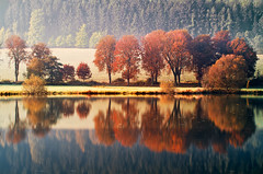 Reflection (zdenisaba) Tags: misty pond autumn field wood leaf water colours mirror treetrunk surface background branch path