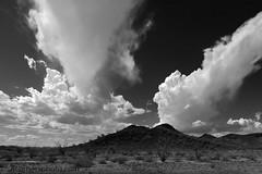 Clouds and Harquahala Mountains, La Paz County, AZ (4 Corners Photo) Tags: 4cornersphoto arizona blackandwhite cactus clouds fouquieriasplendens harquahalamountains lapazcounty landscape monochrome mountains nature northamerica ocotillo outdoor rural scenery sky sonorandesert summer thunderstorm unitedstates weather salome desert