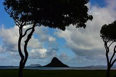 Talking trees (Marian Pollock) Tags: hawaii usa silhouette trees island beach sea clouds sky mountain abstraction