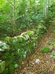 Wilderswil scenes 96 (SierraSunrise) Tags: switzerland wilderswil europe wall stone moss mossy rocks