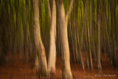 The beech forest (Luca-Anconetani) Tags: forest beechwood autumn nikon natura colorsofnature lemarche regionemarche italy woods lucaanconetani mossocreativo longexposure faggio trees icm intentionalcameramove marcheregion canfaito