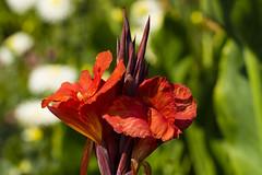 Flowers. (ost_jean) Tags: nikon d5300 tamron sp 90mm f28 di v ostjean fleurs bloemen