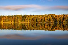#peltolammi #reflection #autumn #ruska #heijastus #suomi #finland (villeleppänen) Tags: heijastus suomi reflection autumn ruska peltolammi finland