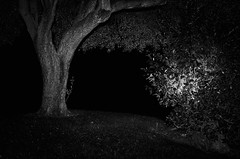 33923 - Natural cave (Diego Rosato) Tags: natural cave gritta caverna naturale albero tree cespuglio bush luche light notte night nikon d700 rawtherapee bianconero blackwhite 85mm nikkor