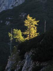 Jesen trka na vrata / Autumn is coming (Damijan P.) Tags: hribi gore mountains hiking slovenija slovenia julijskealpe julianalps alpe alps vodnikovdom cesar pokljuka prosenak