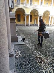 OA145196 DSC07954 (pierino sacchi) Tags: cortile gatto moka nero statue unipv