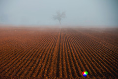 Il gelso solitario (Gianni Armano) Tags: gelso solitario san giuliano nuovo alessandria piemonte italia foto gianni armano photo flickr