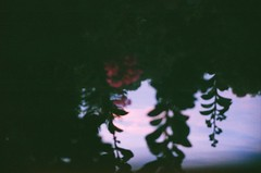 98660013 (slanted and enchanted.) Tags: upside down 35mm film trees flower pink sky clouds float foliage