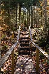 winterriveroct18-270-9 (carrieellengregory) Tags: 2018 autumn carriegregoryphotography fall october pei winterriver