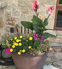 Flowers in Park Lake City, Utah IMG_3019 (soniaadammurray - On & Off) Tags: iphone flowers garden exterior parklakecity utah usa quintaflower artchallenge shadows reflections look enjoy appreciate beauty