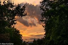 sunset (Al Fontaine) Tags: rain storm neighborhood sunset trees green websterny fall afternoon
