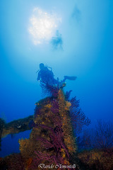 IMG_1416 (davide.clementelli) Tags: diving dive dives padi immersione immersioni ampportofino portofino liguria friends amici underwater underwaterlife sottacqua