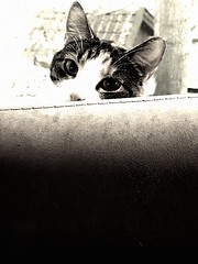 Hi there! (helle_bernhed) Tags: cat katt blick eyes animal djur