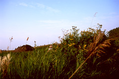 Static Artifacts (Behing Underbush Cover) (Pics from the Bird Cage) Tags: fuji provia fujiprovia artifacts fujifilm fujichrome junk junkyard olympus olympusom1 om1 film e6 colorfilm colorslidefilm slidefilm fujichromeprovia100f sunset zuiko autow zuikoautowf28mm135 omsystem