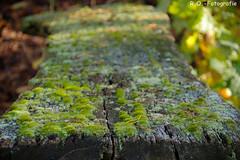 Moos und Flechten / Moss and Lichens (R.O. - Fotografie) Tags: moos moss flechten lichens bank holz natur nature nieheim rofotografie herbst autumn panasonic lumix dmcgx8 dmc gx8 blätter leaves mft micro four thirds g 14140mm outdoor outside