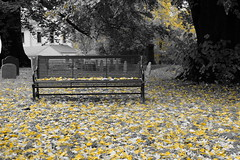 the falling leaves (bndocksaints_kenny) Tags: bench ma cemetery leaf grass stone gravestone graveyard october yellow hingham photography