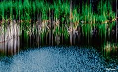 Il lago di Londa illuminato (danilocolombo69) Tags: ngc canneto lago londa danilocolombo danilocolombo69 nikonclubit