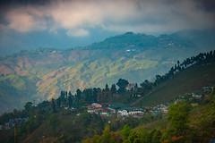 Tea Plantation in Darjeeling, India (CamelKW) Tags: darjeeling india tea plantation