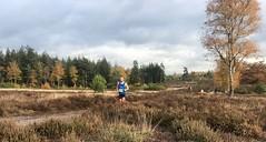 haarlerbergloop 10 km (18)