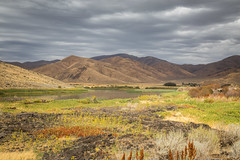 Wild Flowers and Volcanic Rocks (Brad Prudhon) Tags: 2018 arco farm farmrural hayfield idaho rock route20and26 september volcanic water wildflowers cow hay mountains pasture pond scenic