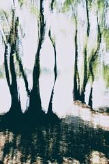 Floodplain (egyugrasatavasz) Tags: floodplain river danube danubedelta nature tree naturephotography