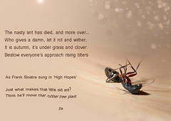 The ant has died (Ziamore) Tags: poem poetry antdied bokeh words text thought philosophy verse rhyme insect philopoets creeter
