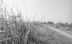 (Vlad Bobe) Tags: ilford ilfordpanfplus film blackwhite monochrome 35mm canoneos1v canon autumn park nature grass sky perspective bucharest vacarestipark foreground tower