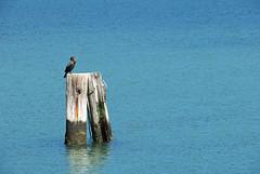 The sound of silence (RainerSchuetz) Tags: ocean blue bollard seabird