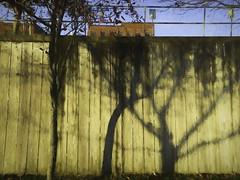 Shadowy Impression (delmarvajim) Tags: digitalart digitalprocessing digitaleffects digitalpainting fineart light shadow wall architecture drama