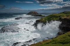 Wild At Heart DSC_9314 (BlueberryAsh) Tags: phillipisland thenobbies oceanseascape australianseascape victoria water ocean blowhole waves coast coastline nikon24120 nikond750