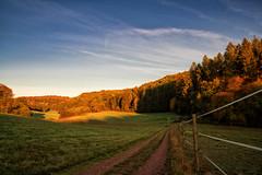 Waldsaumweg 5 (Wolfgang Staudt) Tags: waldsaumweg losheimamsee saarland hunsrueck deutschland hausbach britten wanderweg traumschleife rundweg wandern natur wald waldrand laendlich abgelegen tourismus saarhunsruecksteig saarschleifenland