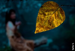 Please, Come back ... (N.Batkhurel) Tags: season autumn leaf leaves forest people woman mongolia macro closeup ngc nikon nikond5200 nikkor 105mm