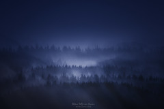 When everybody sleeps (Mimadeo) Tags: night forest mountain mystery fog tree trees moonlight scenic woods landscape wilderness mist misty monochrome toned blue pine pines dark shadow carpathian carpathians black spooky mood moody evening copyspace darkness fear creepy mysterious gloomy gothic foggy norway norwegian cold scary distant horror