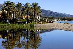 Palmeras (camus agp) Tags: reflejos marbella palmeras españa costa playa