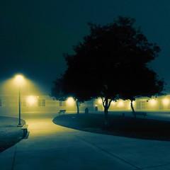 Silence (stonelaveaux) Tags: lakebuenavista silence calm peace stillness morning light fog mist florida cyclinglife cyclist cycling