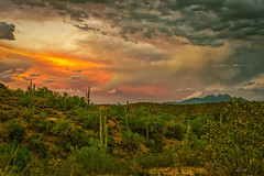 4 Peaks monsoon vs sunset (nealsummerton1) Tags: desert monsoon clouds storm cactus saguaro nikon d800 tamron 2470g2 arizona az
