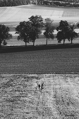 Always alone (Soren Wolf) Tags: man people alone bw black white tree trees fields agricultural farmland farmlands forest nikon d7200 helios 58mm 44m4