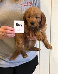 Darby Boy 1 12-9