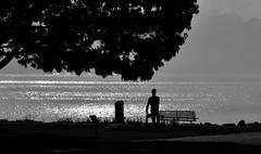 Silhouettes (Diegojack) Tags: vaud suisse paysages saintsulpice contrejour noirblanc silhouettes scènedevie léman brillance d500 nikon nikonpassion groupenuagesetciel