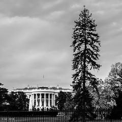 The White House, Washington, D.C. (georgechamoun1984) Tags: washingtondc usa america unitedstates districtofcolumbia dc washington nationalmall unitedstatescapitol thewhitehouse neoclassical palladian