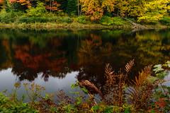 Reflections Muskoka River - 0924 (RG Rutkay) Tags: autumn fall river water reflections trees leaves landscape muskoka