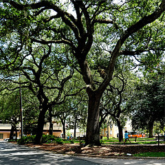 Savannah, Georgia, USA (pom'.) Tags: panasonicdmctz101 july 2018 america northamerica usa unitedstatesofamerica georgia savannah trees park 100 fromamovingvehicle 200 americanwayoflife