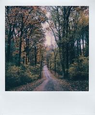 (ltpaperhouse) Tags: fall polaroidweek instantfilm polaroidoriginals slr670s mint
