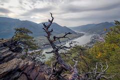 Donaublick (Erich Hochstöger) Tags: landschaft donau fluss spitz spitzanderdonau wachau welterbesteig herbst natur landscape danube autumn austria
