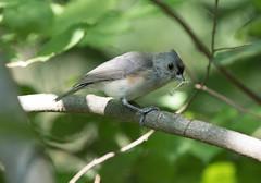 breakfasst (CGDana) Tags: washington dc zoo nattional smithsonian animal bird avian bug food canon 7d
