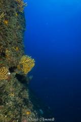IMG_1301 (davide.clementelli) Tags: diving dive dives padi immersione immersioni ampportofino portofino liguria friends amici underwater underwaterlife sottacqua