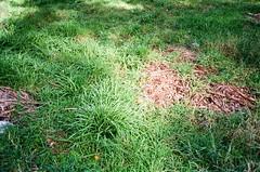 More weeds! (Matthew Paul Argall) Tags: canonsnappy20 fixedfocus 35mmfilm ultramax kodakultramax400 kodak400 400isofilm weeds plants green untouchedandunedited