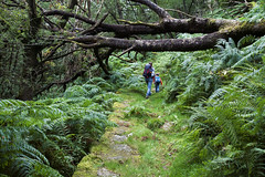 The fallen tree (Christian Hacker) Tags: woodland forest oaktrees fallentree fern lush vegetation dense outdoors nature dartmoor nationalpark devon uk landscape grass green mossy ancient adventure hiking walk climb path people rucksack fun canon eos50d tamron 1750mm hike child mother kid boy family rocky