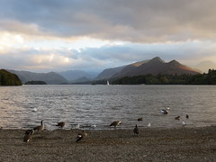 Derwent Water (Skoda Girl) Tags: derwent water keswick lake district cumbria geese stony shoreline mountains birds wildlife nature landscape sky clouds light shadow distance dramatic vast reflection ripples sailboat sailing yacht sails